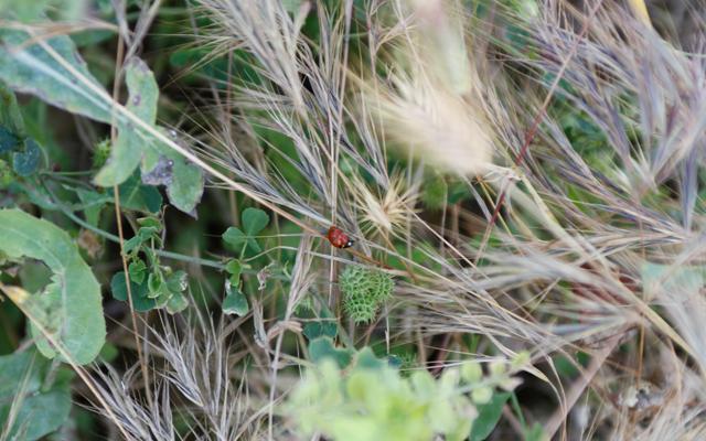 ladybird (John Hinde)