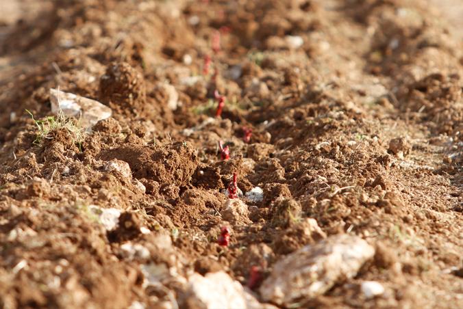 Soil_closer