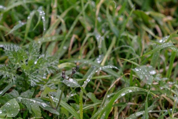 raindrops Son Alegre Mallorca