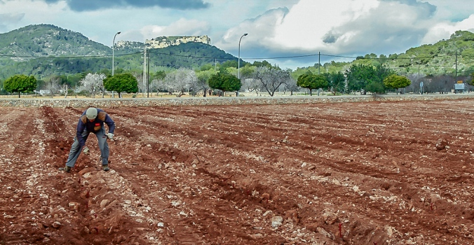 Camp d'en Ventura Santanyí Mallorca  1