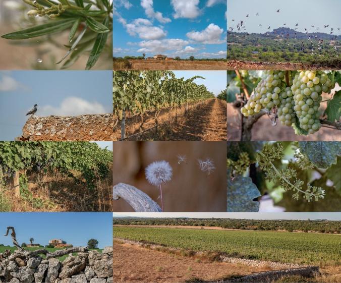 Son Alegre Mallorca 1