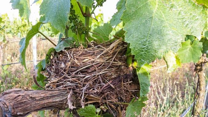 birds-nest 1