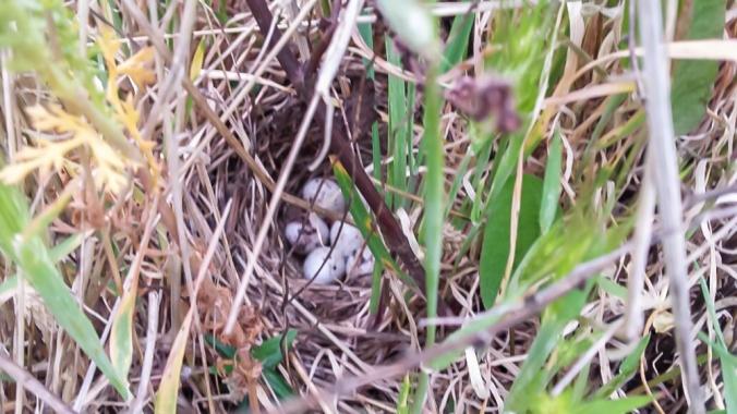 birds-nest 3