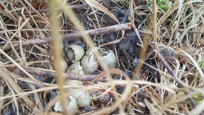 birds-nest 4