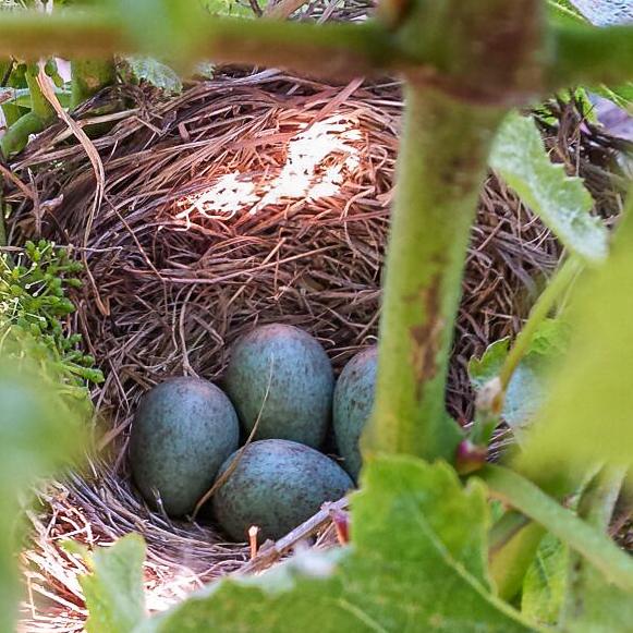 birds-nest 10