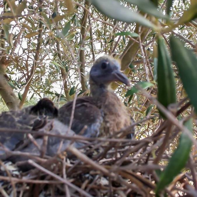 birds-nest 11