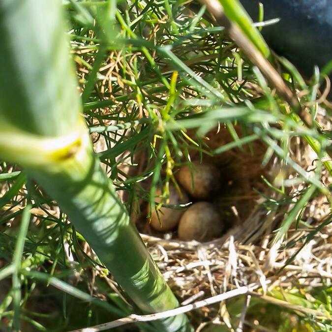 birds-nest 12