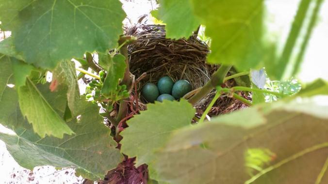 birds-nest 13