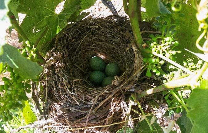 birds-nest 14