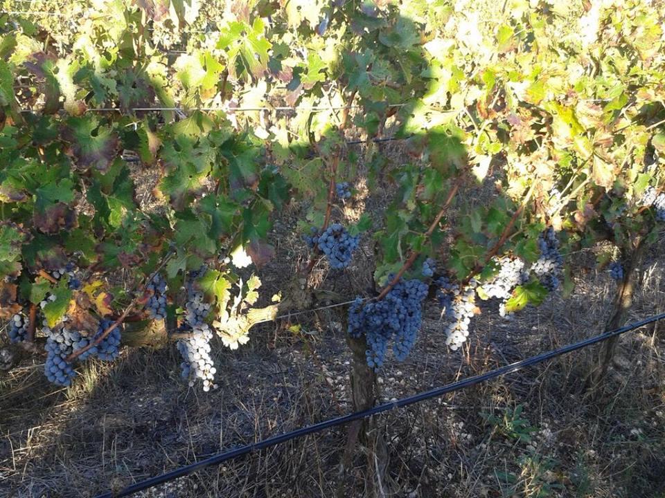 Natural Winemaking At Home