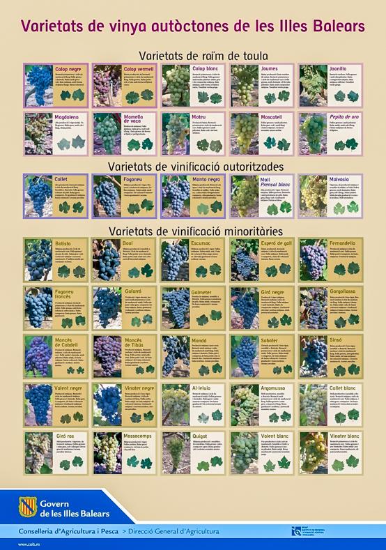 varietats-de-vinya-2